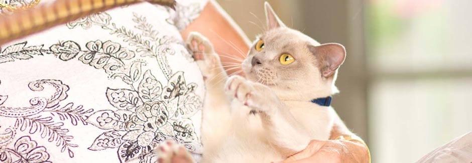 site za mačke uk